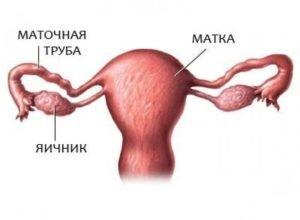 Пролиферация кишечного эпителия что это