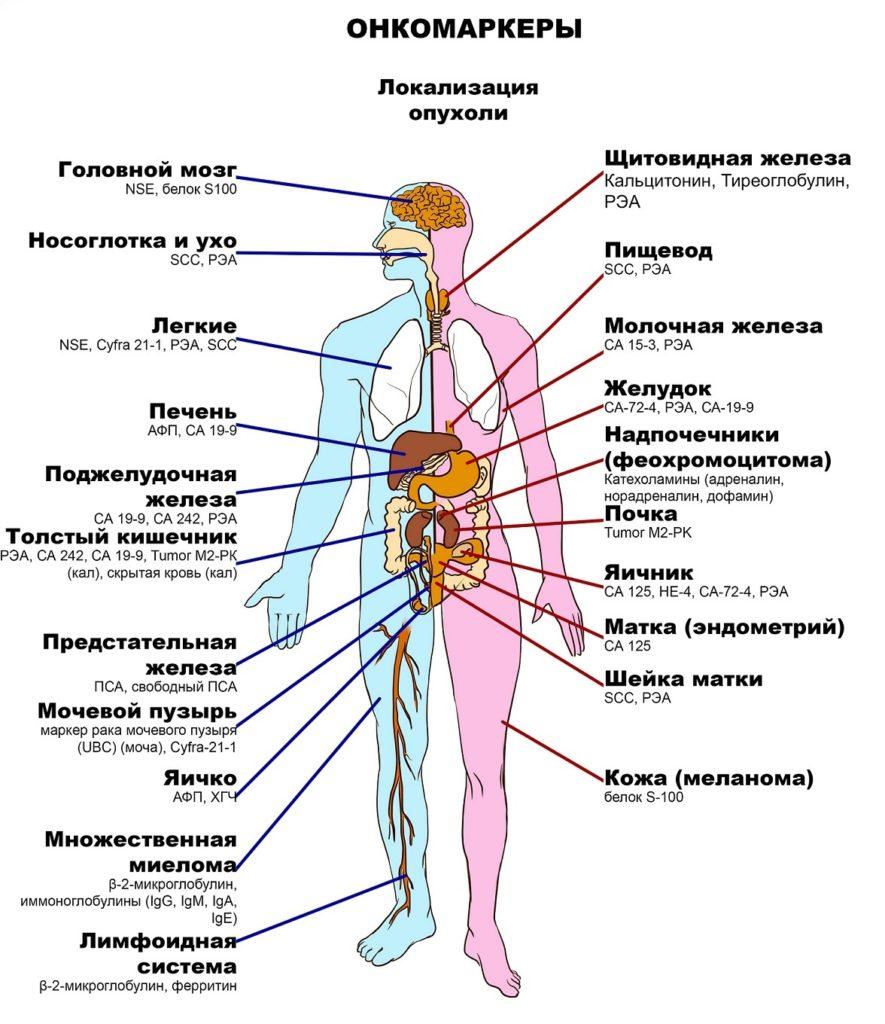 Онкомаркеры показывают рак 21