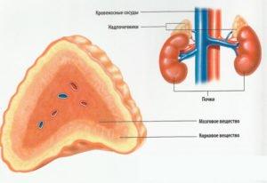 Феохромоцитома и креатинин