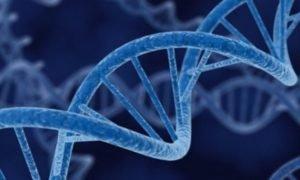 Генетическая предрасположенность - факторов малигнизации