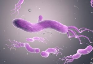 Бактерия Helicobacter pylori - фактор провоцирующий рак желудка
