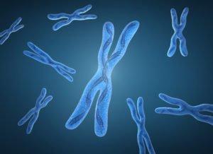 Хромосомных мутаций