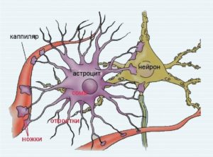 Астроциты